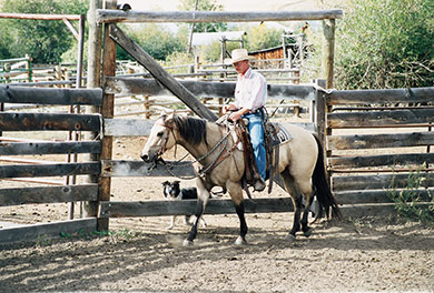 An Authentic Ranch Experience - G Bar M Ranch